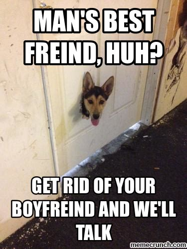 Hyper Dog Meme - funny husky memes