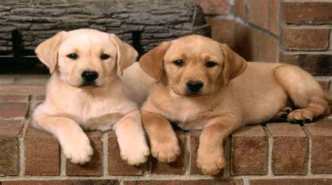 medium dogs medium breeds nicefarming
