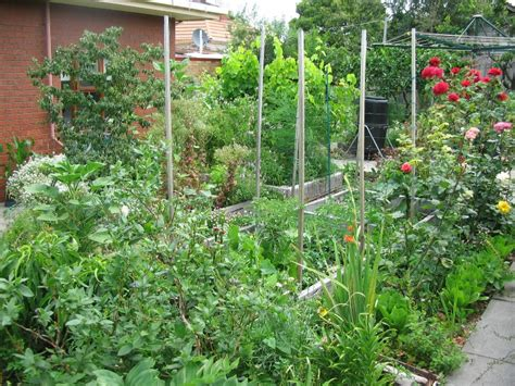 backyard permaculture design my garden deep green permaculture