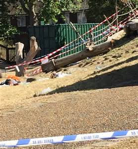 swing accident girl 5 died after mile end park tree tree her rope swing