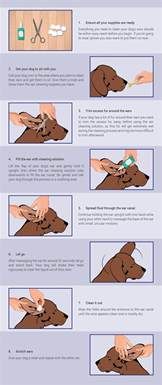 how to clean your dog s ears montego