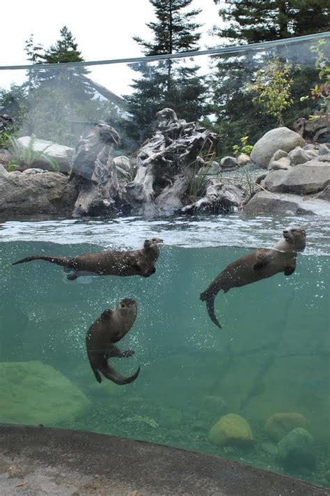 Zoologischer Garten Berlin Opening Times by Otter Ly Amazing Zoo Gets New Exhibit Redheaded Blackbelt
