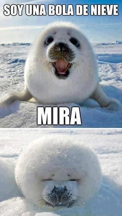 imagenes de focas blancas focas bebes tumblr