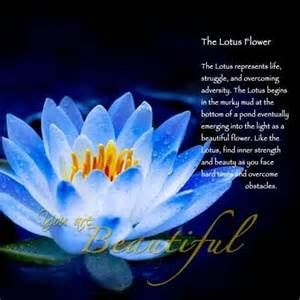 Lotus Flower Spiritual Meaning Beautiful Prayers Quotes Inspiration
