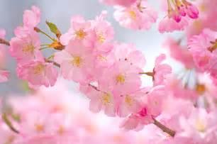 Earth Home Decor essex county cherry blossom festival branch brook park