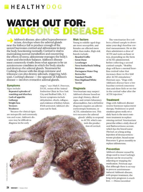 addisons disease dogs disease in dogs www imgkid the image kid