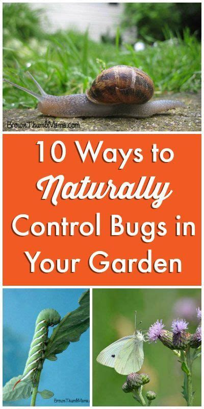 how to get rid of backyard bugs natural ways to get rid of bugs in your garden gardens