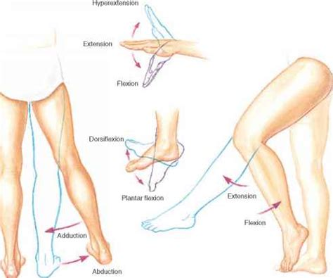 Flexi On rotation and circumduction blood vessels guws