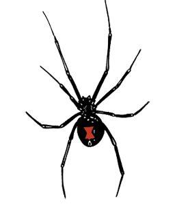 spider tattoo png intelligent gadgets