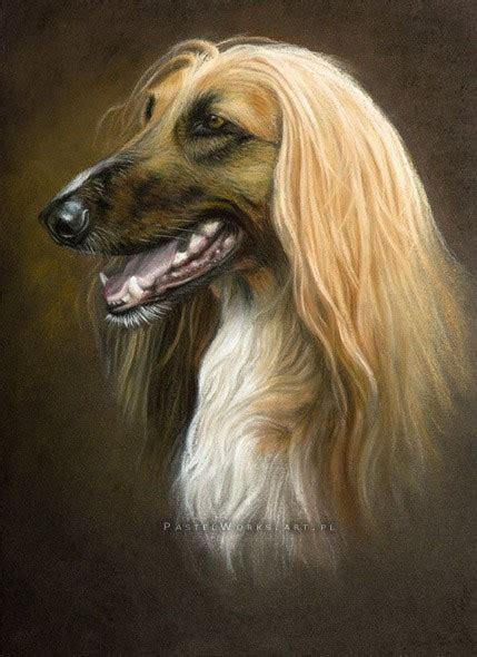 afghan hound pet portraits animal art