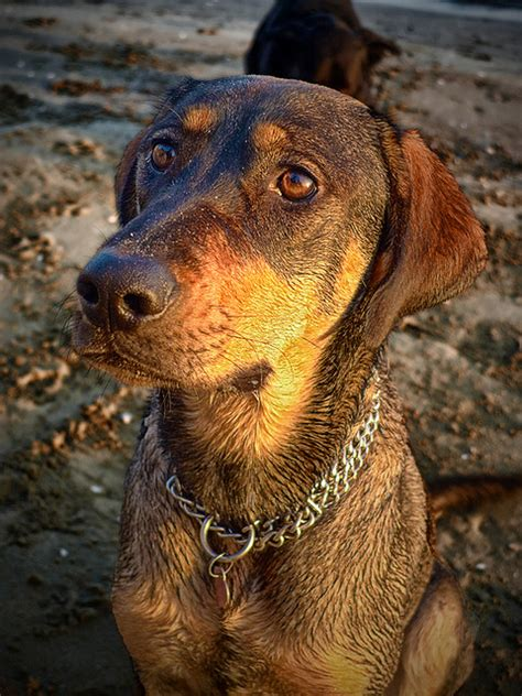 treating diarrhea in dogs home remedies for treating diarrhea in dogs