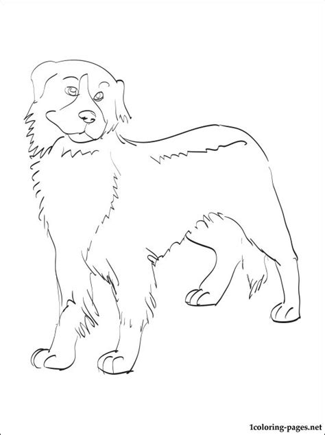 mountain dog coloring page bernese mountain dog coloring pages coloring pages