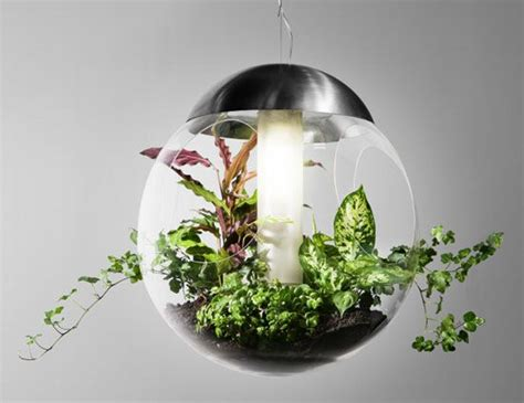 pendant lamp  lights grows cleans  air babylone