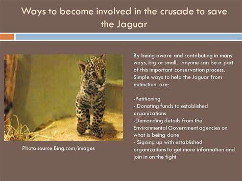 endangered species jaguar debbie s jaguars on the endangered species list