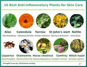 best medicine for inflammation 10 best anti inflammatory plants for skin care swettis