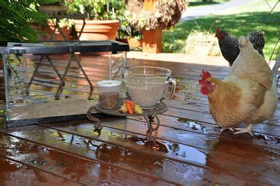 Backyard Chickens Mealworms 20 Best Images About Chicken Coop Ideas On