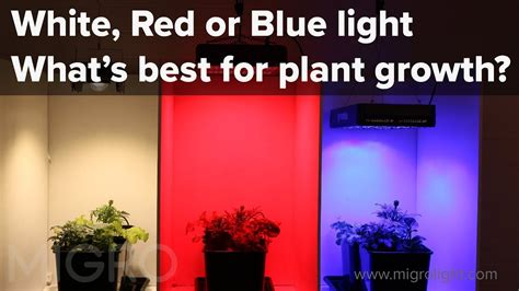 does the color of light affect plant growth the effect of red blue and white light on plant growth