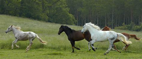 imagenes libres animales fotos gratis naturaleza prado pradera animal manada