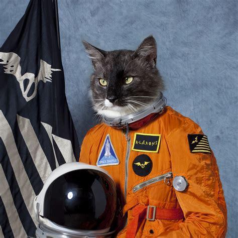 Cat In Space cats cat in space