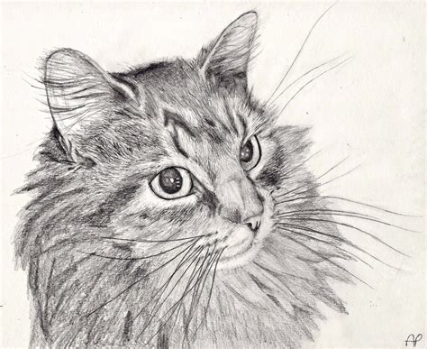 Cat Pencil pencil sketches of cats how to draw a cat pencil solution for how to for dummies drawing