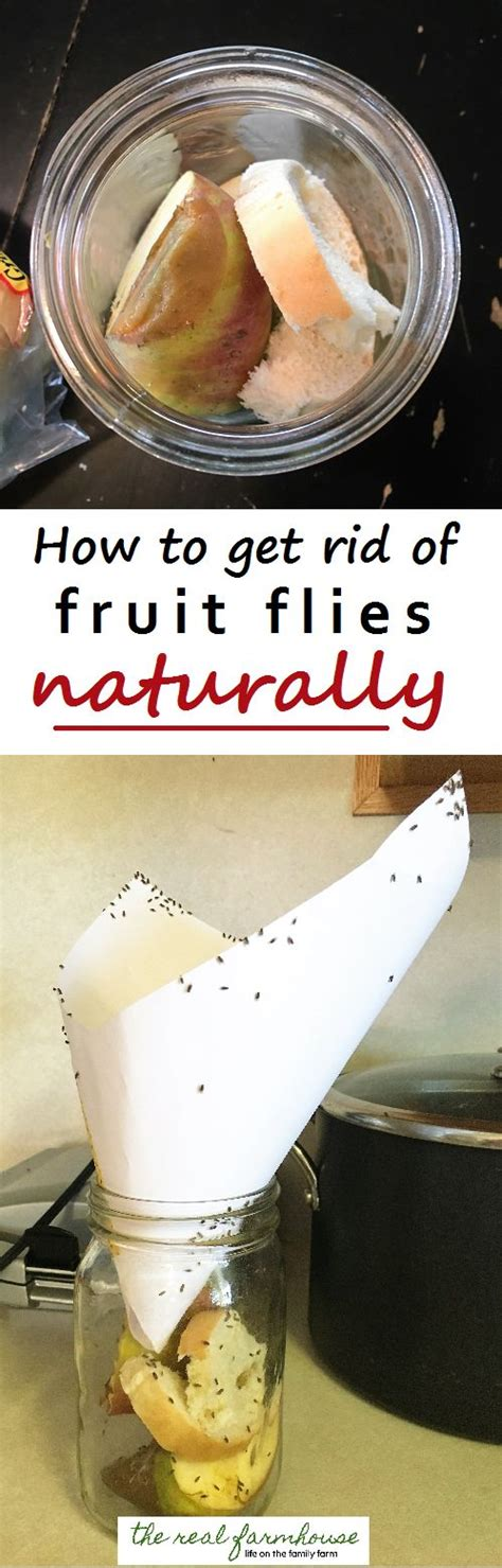 best way to get rid of flies in backyard 17 best ideas about fruit flies on pinterest how to get