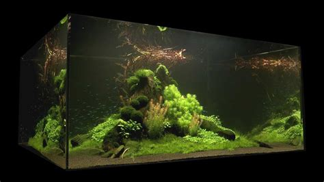 Nature Aquascape by Nature S Chaos Aquascape 1 Year By Findley