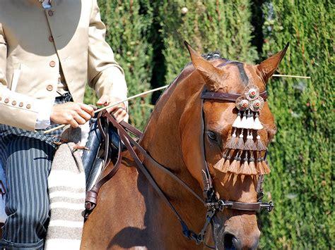 imagenes de vaqueras y caballos doma vaquera en valencia el mosquero debe balancearse al