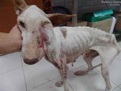 imagenes de animales maltratados imagenes que te haran llorar maltrato animal taringa