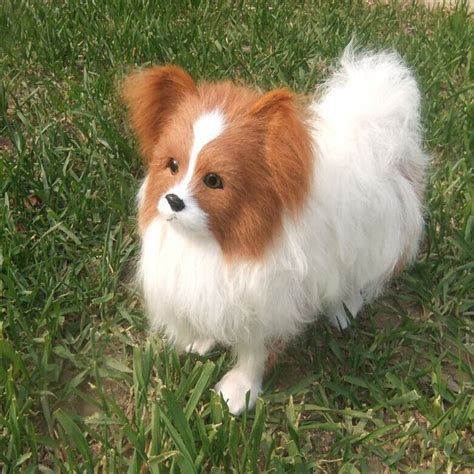 papillon price compare prices on papillon stuffed animal shopping buy low price papillon