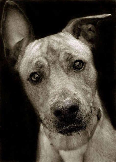 imagenes de animales tiernos para descargar fotos de perritos m 225 s tiernos del mundo para descargar