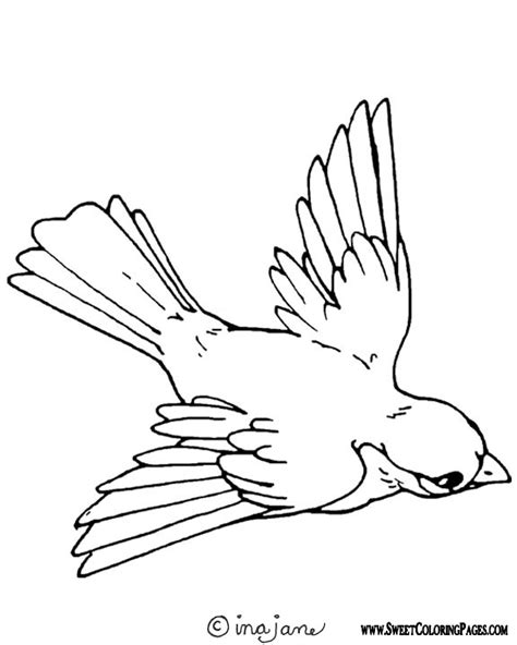 Free Bird Pet Coloring Pages Bird Coloring Pages For