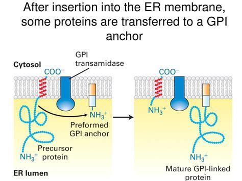 protein    correct cellular