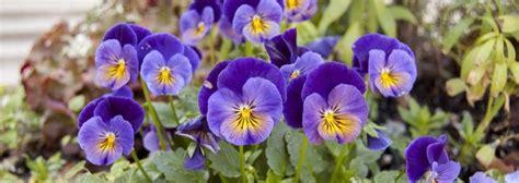 Pflanzen Im Garten Umsetzen by 14 Best Ratgeber Diy Pflanzen Pflanzk 252 Bel Garten