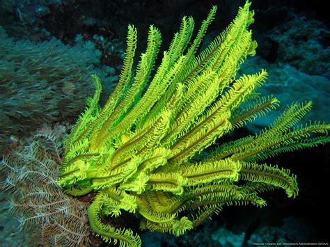 Lili Lengan yellow crinoid free sea wallpaper on sea and sky