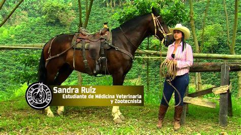 fotos caballos verga parada mujeres cogidas por vergas de caballo historias de mujeres