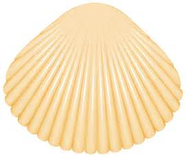 clam shell png clip art clipart