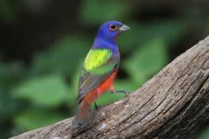 color bird bird s eye view has four dimensions of color nature
