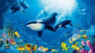 underwater coral reef colorful fish marine fauna ocean orcas killer whales