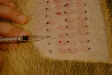 can dogs be allergic to cats allergy testing