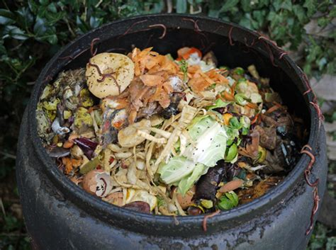 composting at home love2learn allotmenting