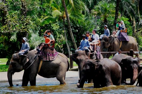 bali elephant ride tour elephant ride bali tour operators