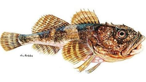 warum haben fische schuppen nationalpark friesland mit schuppen haben fische