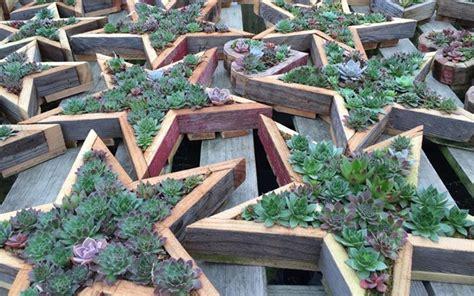 piante per fioriere fioriere in legno vasi per piante scegliere le