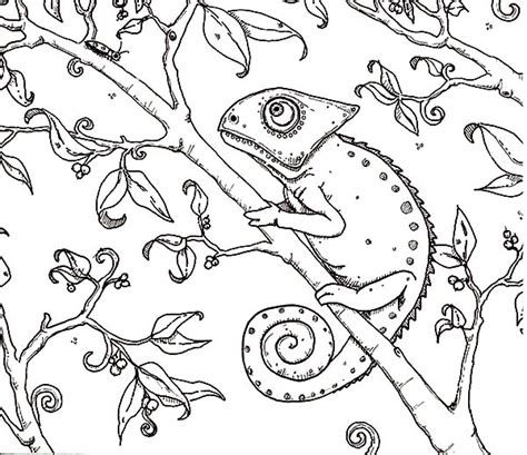 Mixed Up Chameleon Coloring Page by Chameleon Painting Coloring Pages Best Place To Color