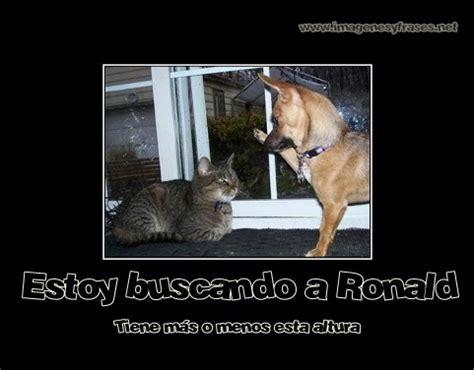 imagenes motivadoras y graciosas im 225 genes de perros y gatos graciosas para el whatsapp