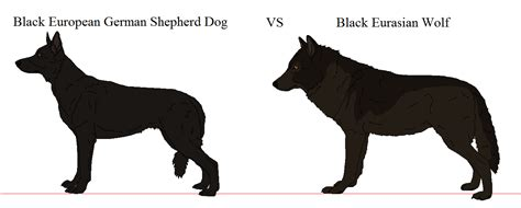 rottweiler vs wolf german shepherd vs wolf pictures to pin on pinsdaddy