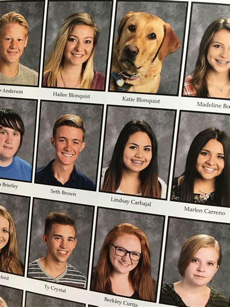 diabetic service dog appears  utah yearbook peoplecom