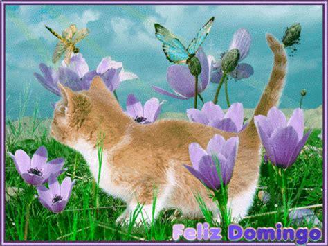 imagenes feliz domingo con gatos un feliz domingo para todos en el foro un mundo mejor