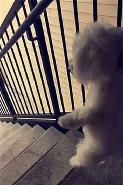 kicked puppy snap chat shows small white kicked apartment stairs pet rescue report