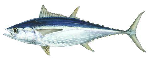 Sale Fish Eye Gagang Panjang budi daya ikan mengidentifikasi jenis jenis ikan air
